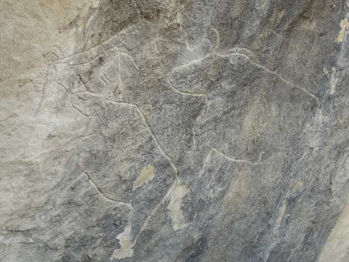 Many engravings in Gobustan National Park depict animals in this case prehistoric a bull and a cow