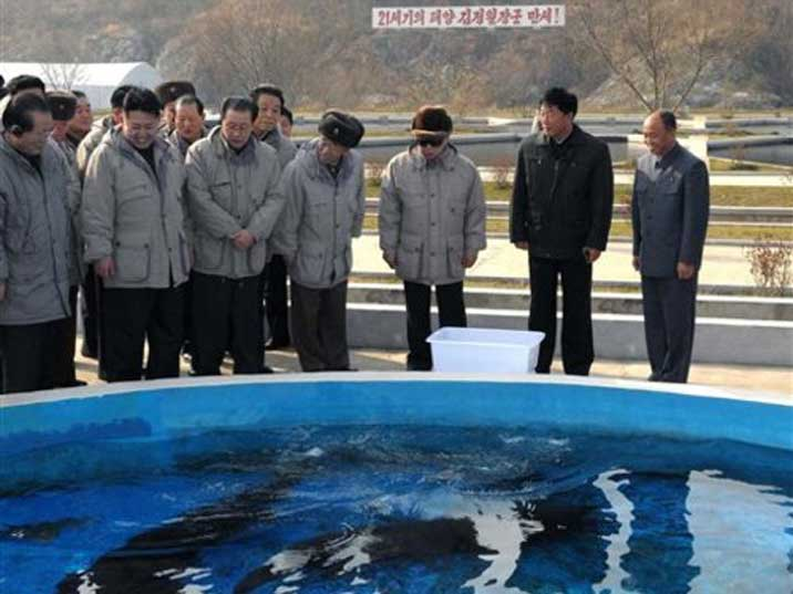 Kim Jong Il looks at fish swimming in a shallow fish tank