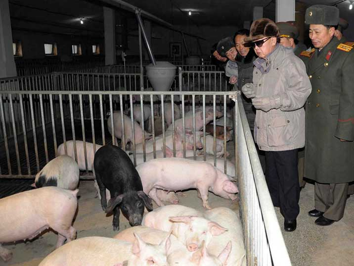 Kim Jong Il inspects the October 7 Pig Farm under KPA's Unit 534