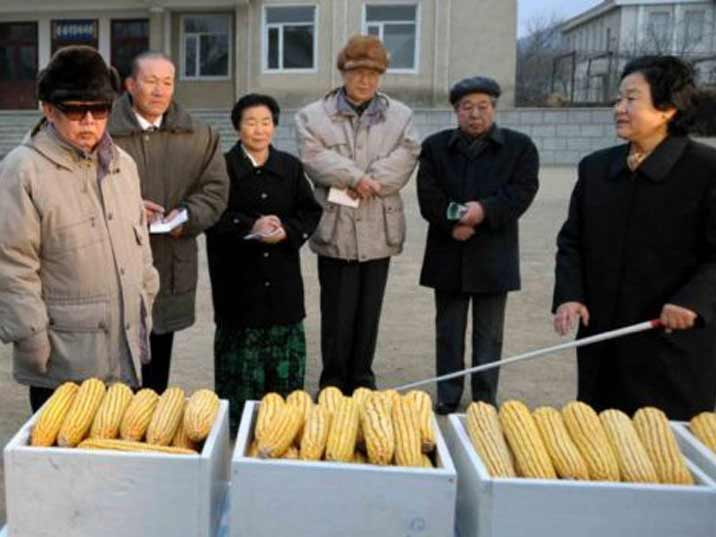 Kim Jong Il looking at corn while a lady explains what he sees with a pointing stick