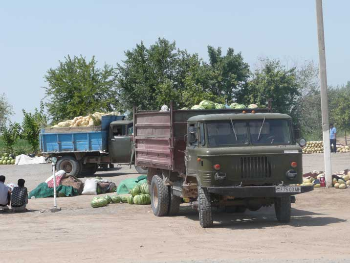 Trucks take juicy melons from the fields during harvest time