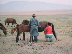 Mongolian nomad man and woman milking a horse near their Ger